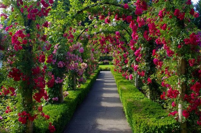 加拿大Italian Garden 花园_图1-26