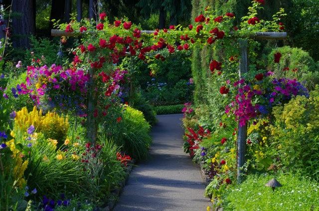 加拿大Italian Garden 花园_图1-27