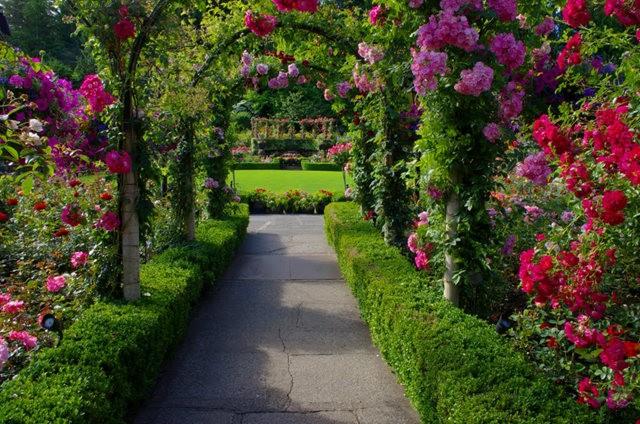 加拿大Italian Garden 花园_图1-30