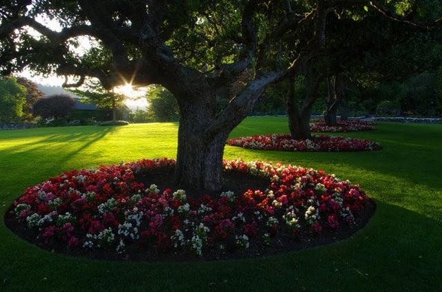 加拿大Italian Garden 花园_图1-31