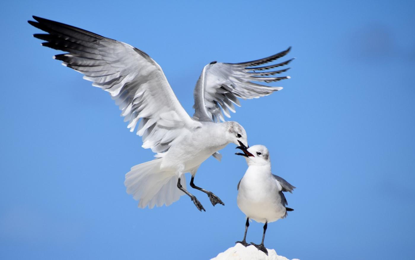 海鸥飞翔_图1-1
