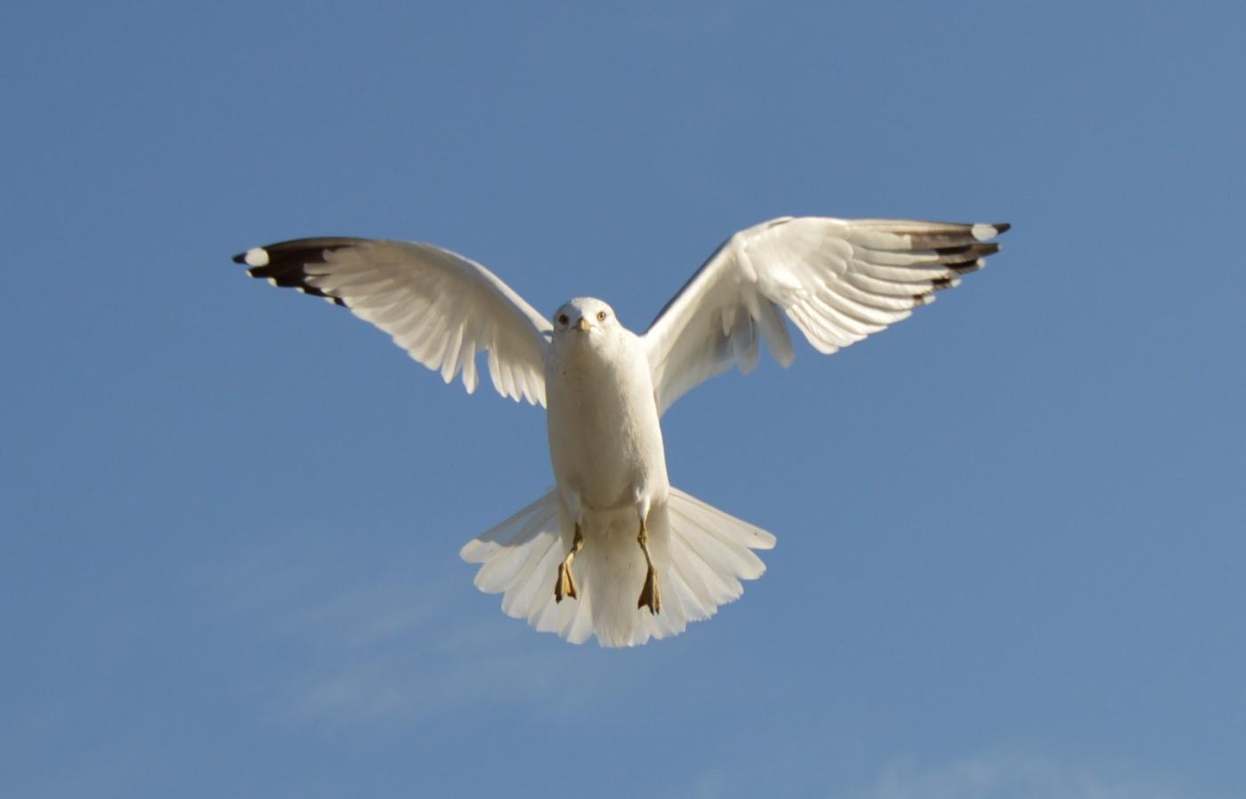 海鸥飞翔_图1-3
