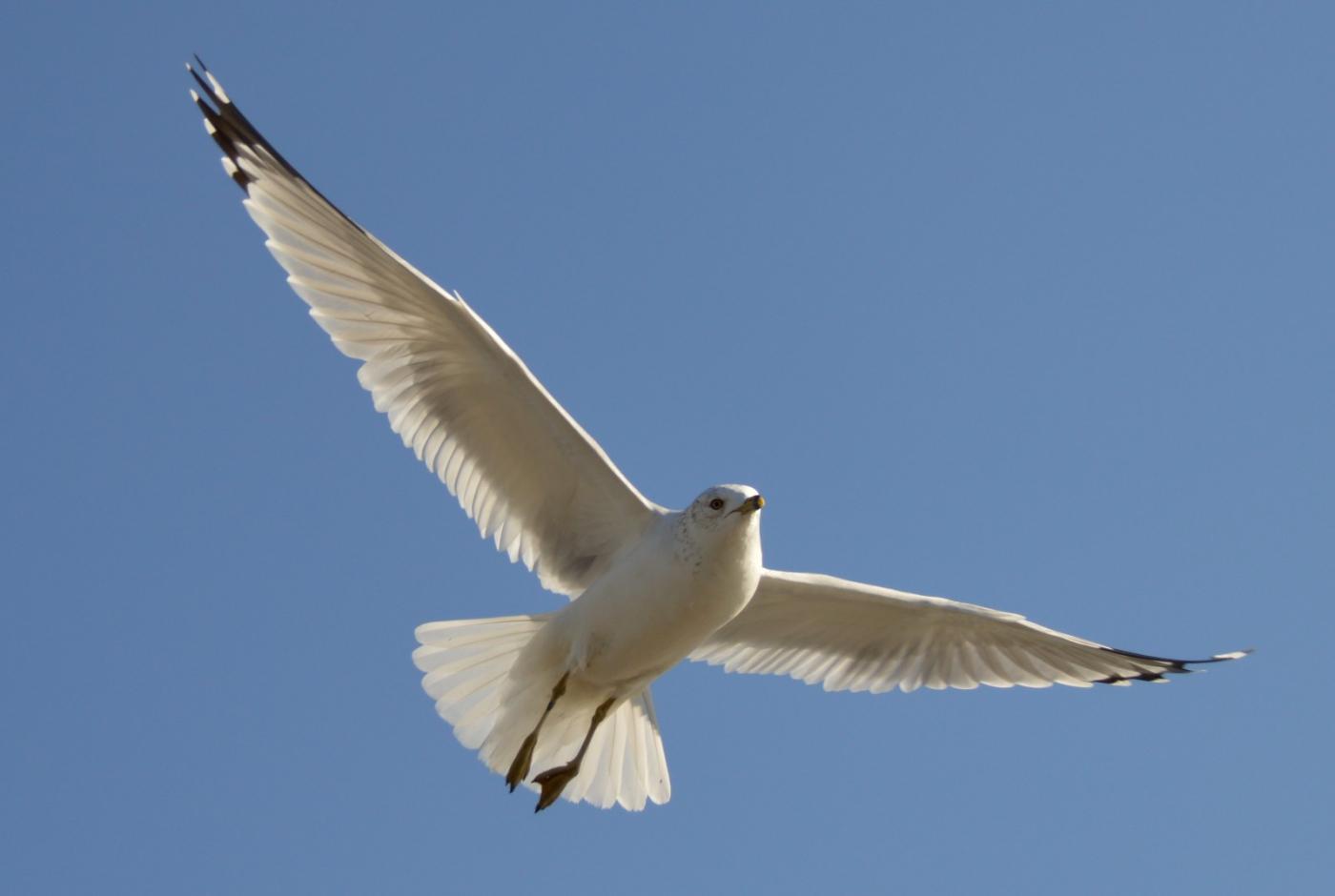 海鸥飞翔_图1-4
