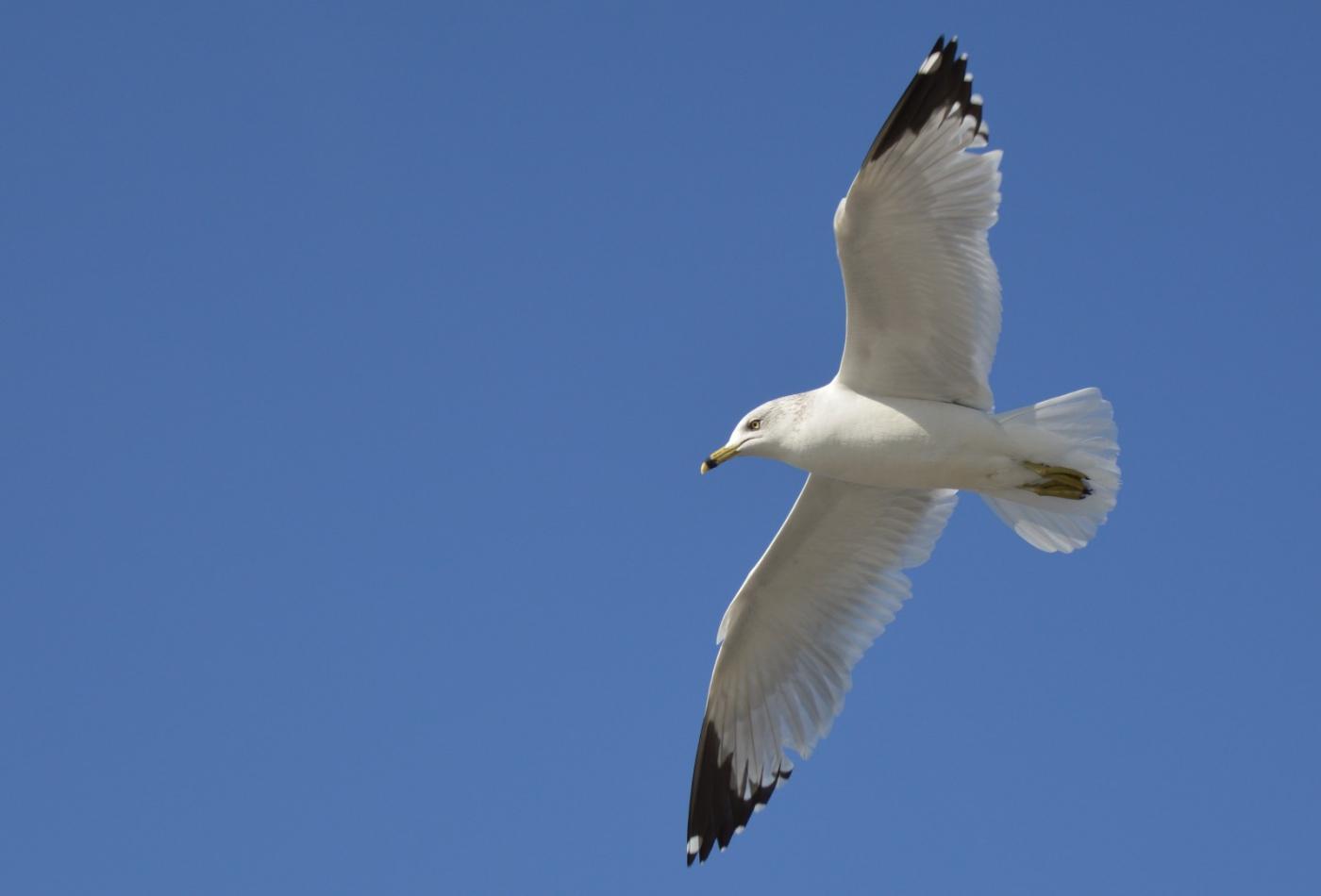 海鸥飞翔_图1-5