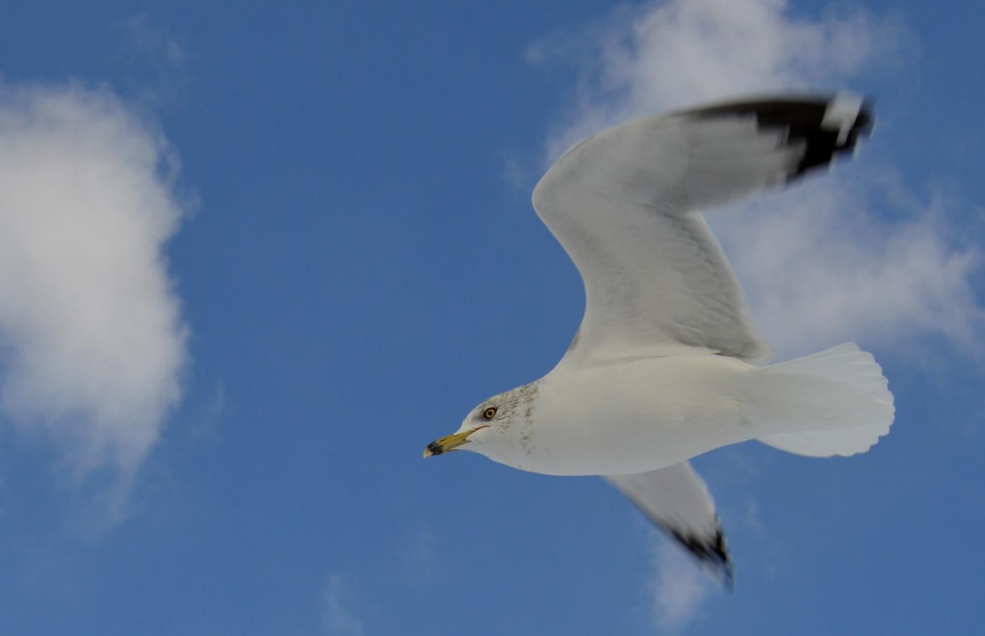 海鸥飞翔_图1-6