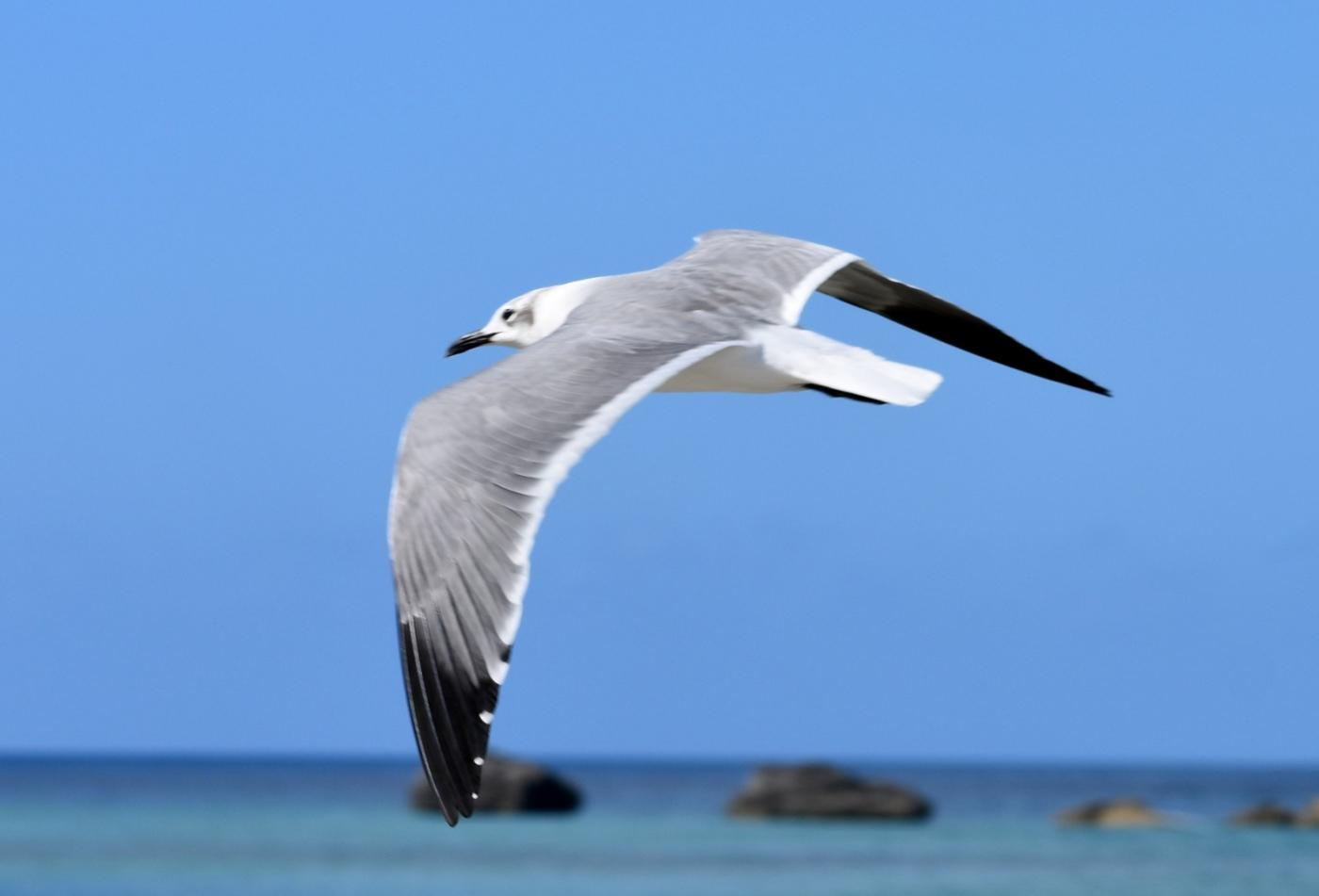 海鸥飞翔_图1-7
