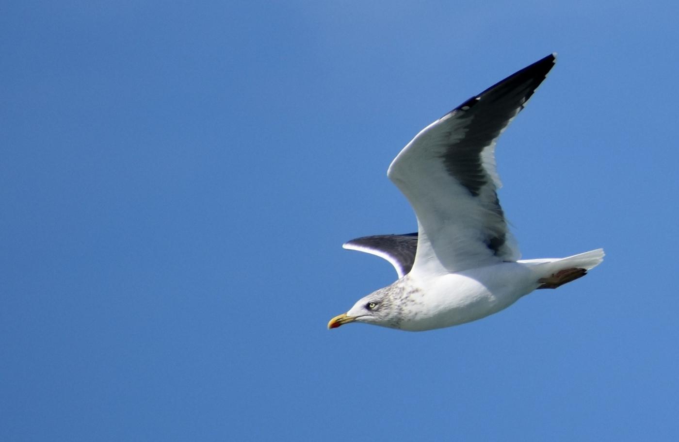 海鸥飞翔_图1-8