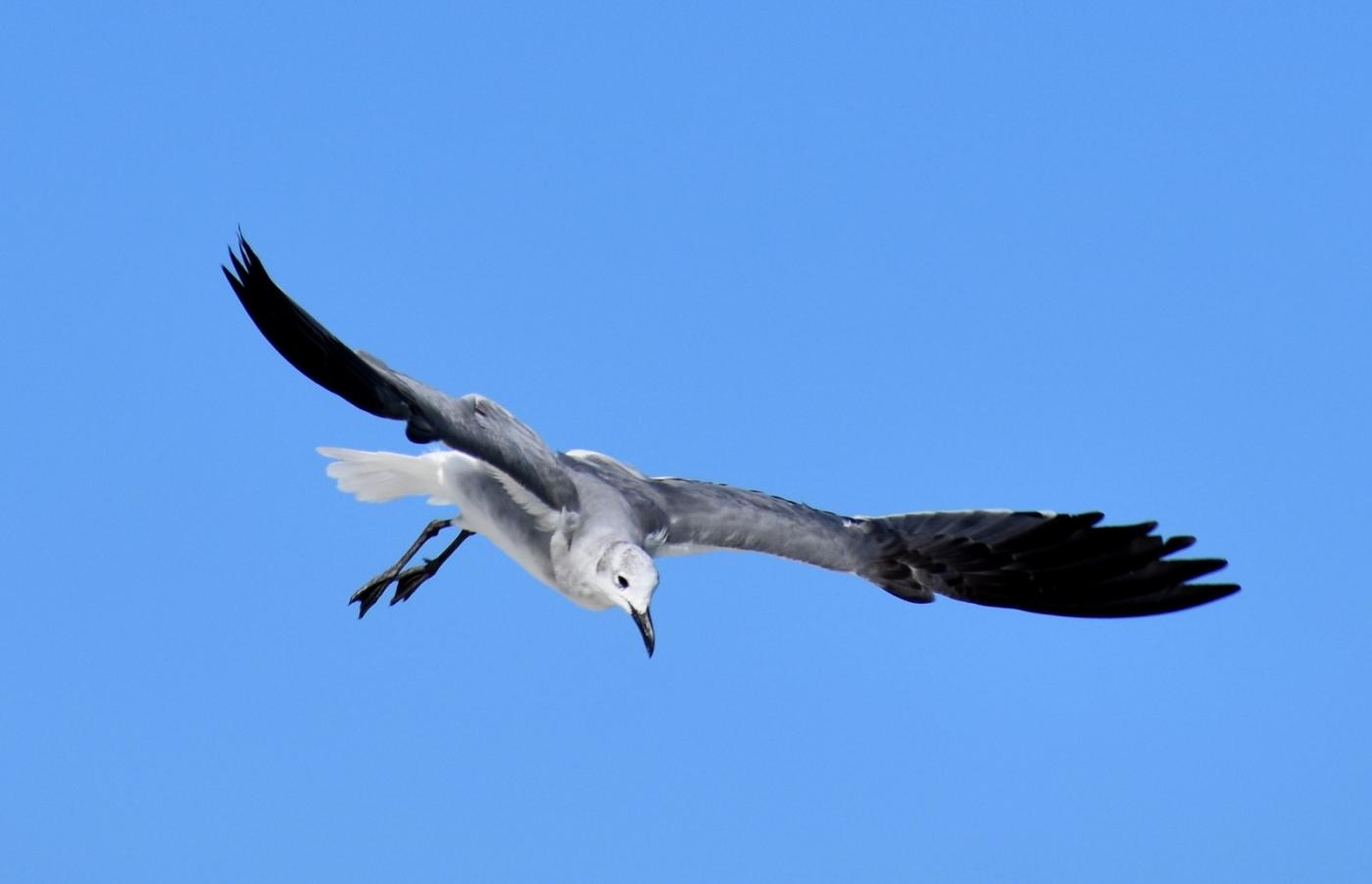 海鸥飞翔_图1-9