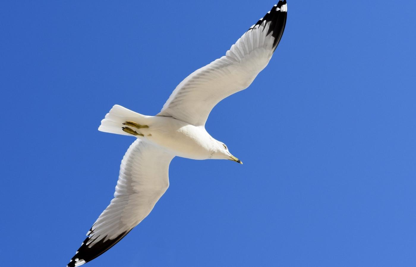 海鸥飞翔_图1-12