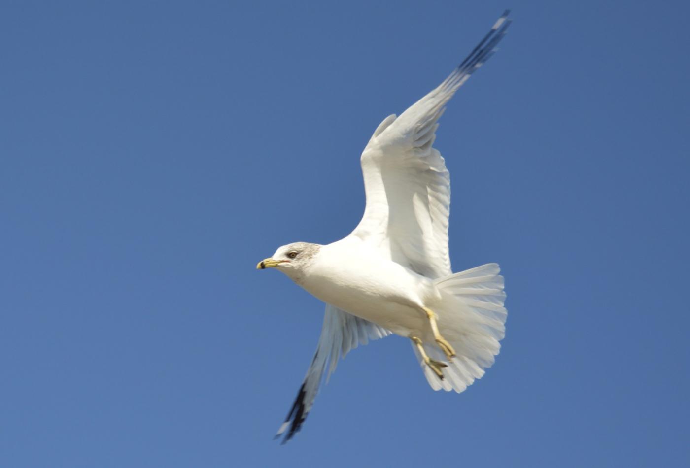 海鸥飞翔_图1-19