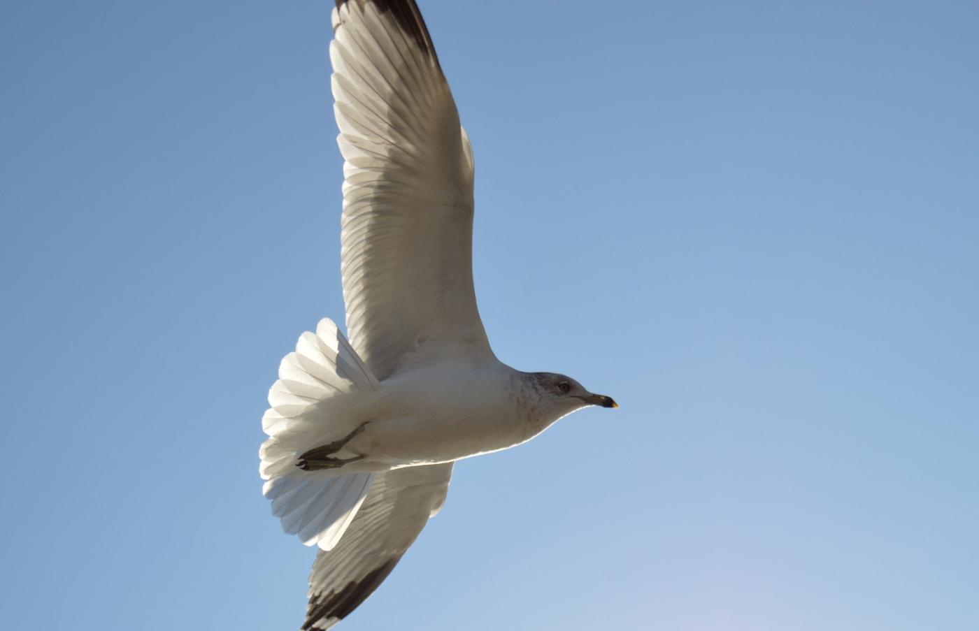 海鸥飞翔_图1-20