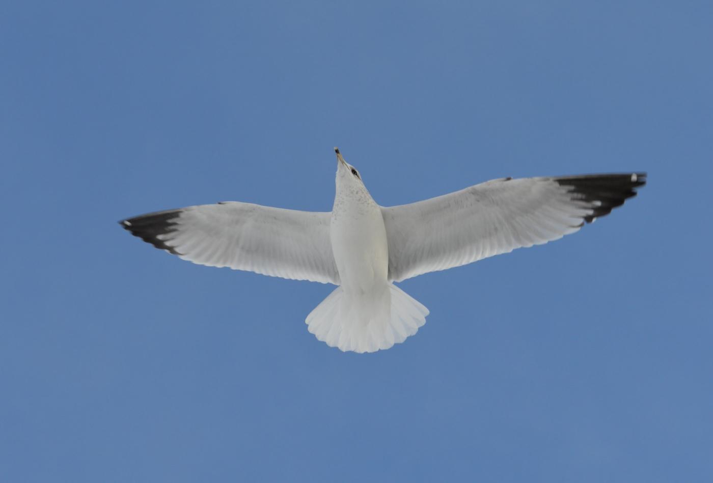海鸥飞翔_图1-21
