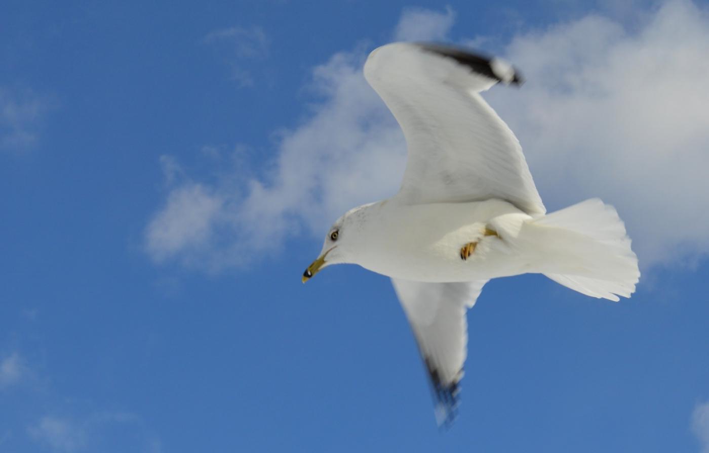 海鸥飞翔_图1-22