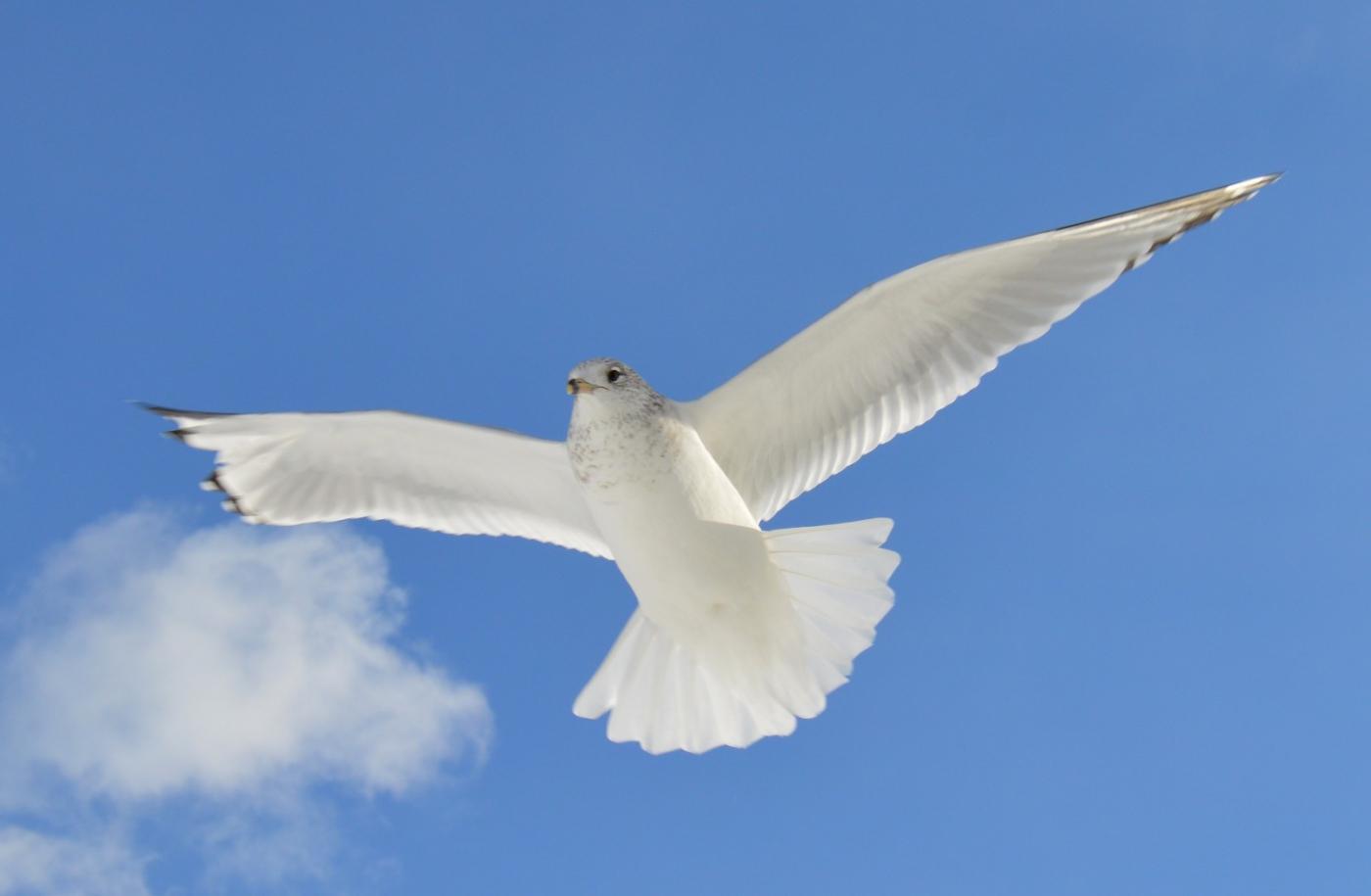 海鸥飞翔_图1-23