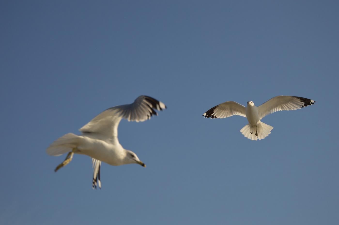 海鸥飞翔_图1-24