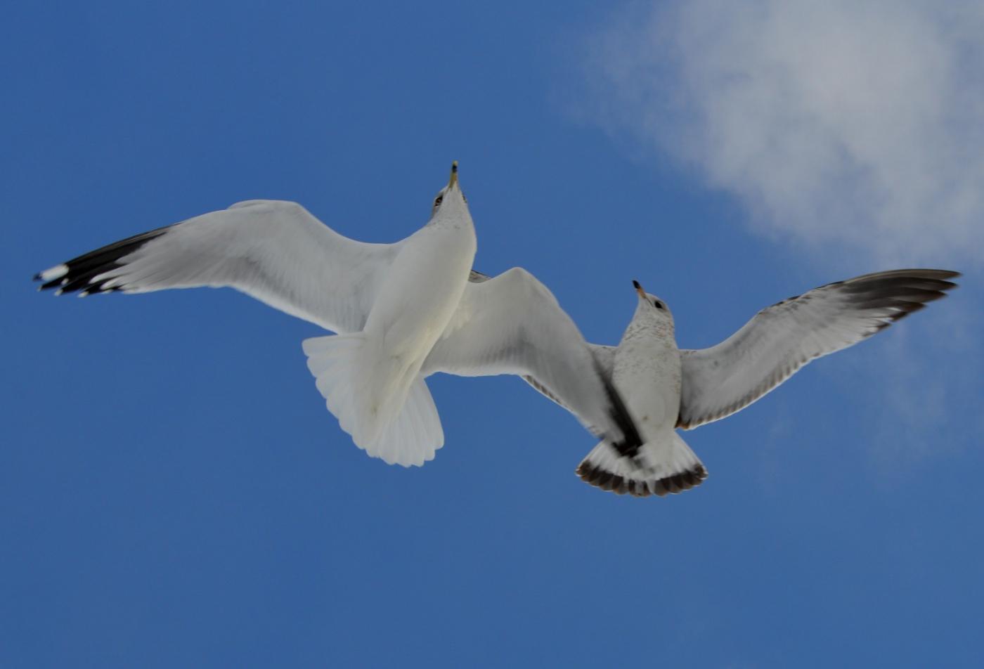 海鸥飞翔_图1-28