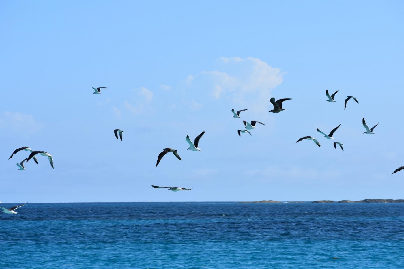 海鸥飞翔_图1-31