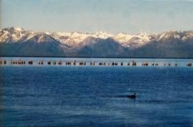 塔霍湖的冬天(一)