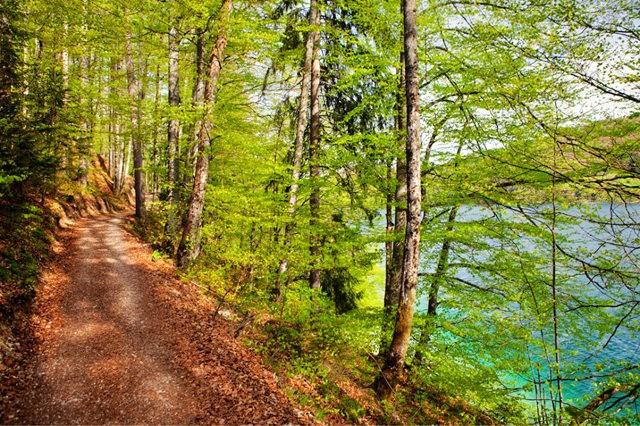 Lake View 湖_图1-5