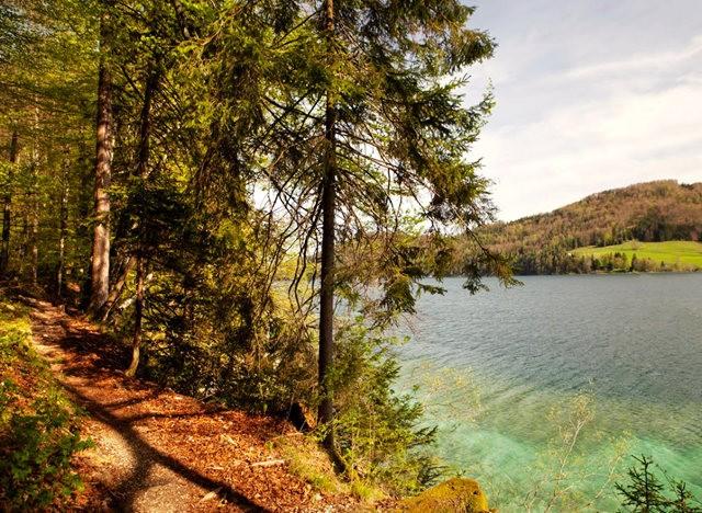Lake View 湖_图1-6