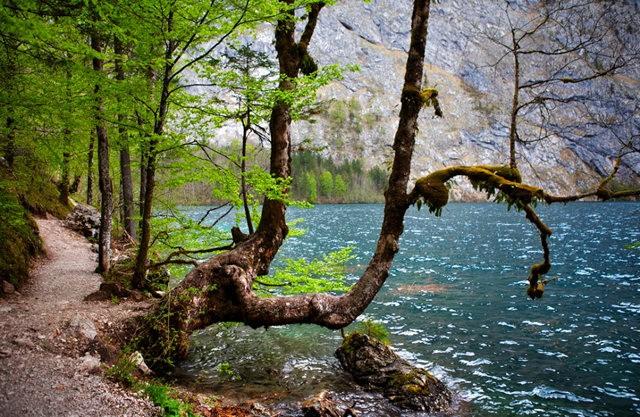 Lake View 湖_图1-8