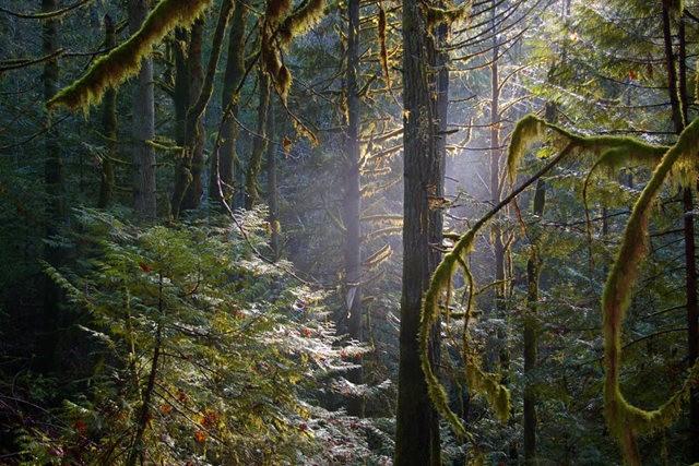 黃金溪的雨林_圖1-1