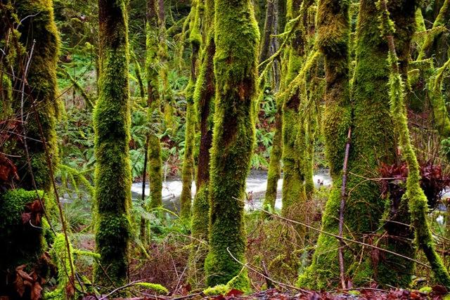 黃金溪的雨林_圖1-5