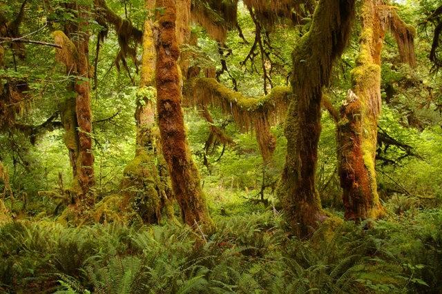 黃金溪的雨林_圖1-7