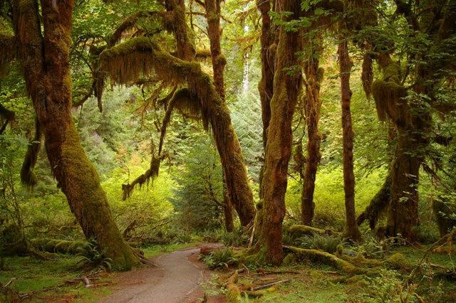 黃金溪的雨林_圖1-8