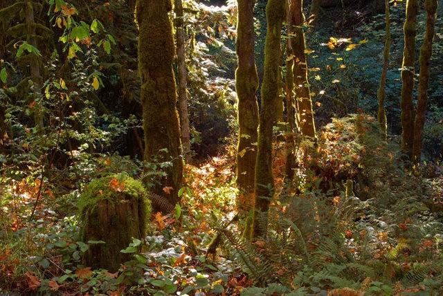 黃金溪的雨林_圖1-10