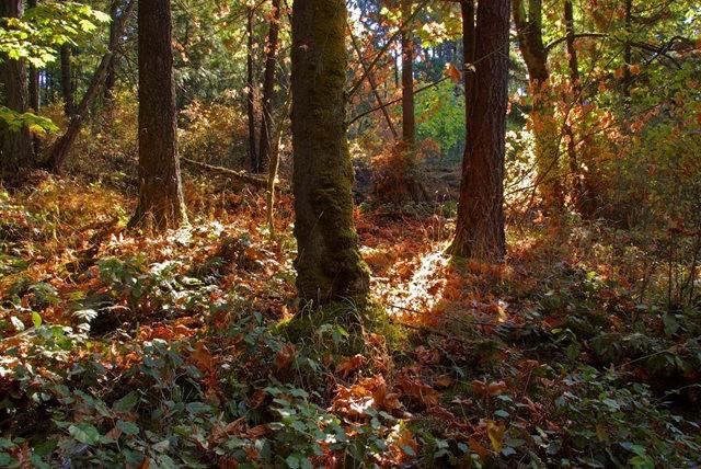 黃金溪的雨林_圖1-11