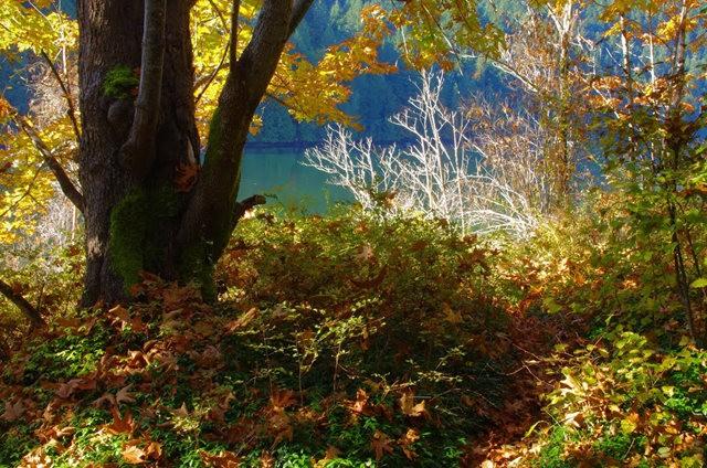 黃金溪的雨林_圖1-16