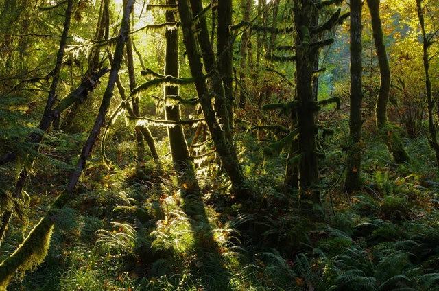 黃金溪的雨林_圖1-17