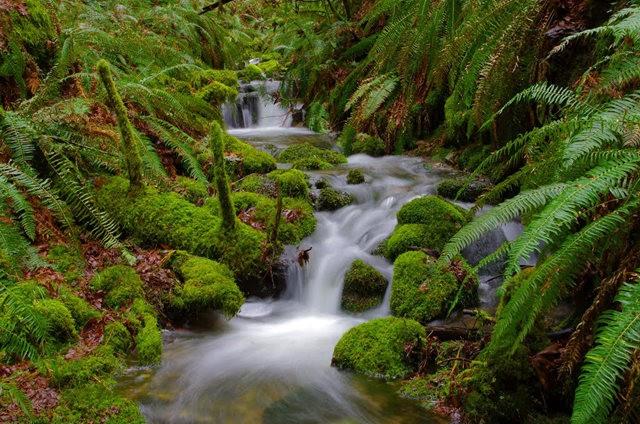 黃金溪的雨林_圖1-20