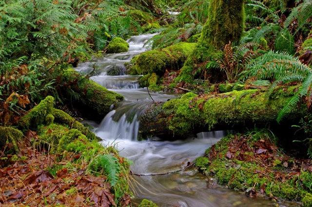 黃金溪的雨林_圖1-21