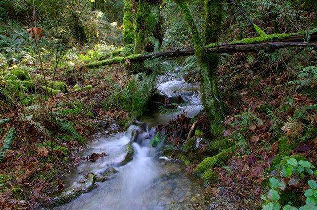 黃金溪的雨林_圖1-22