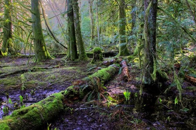 黃金溪的雨林_圖1-24