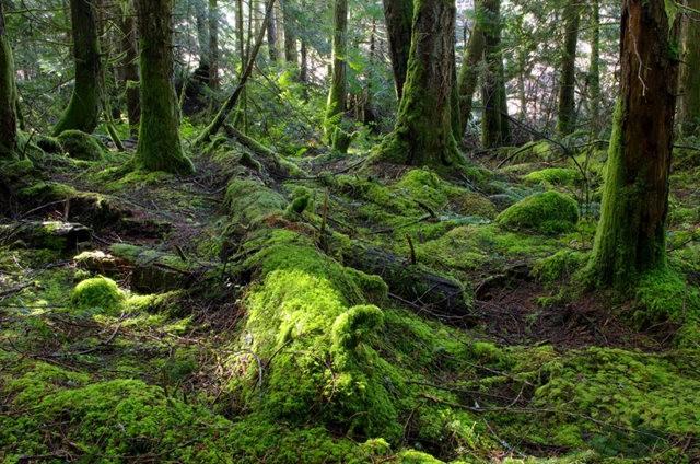 黃金溪的雨林_圖1-25