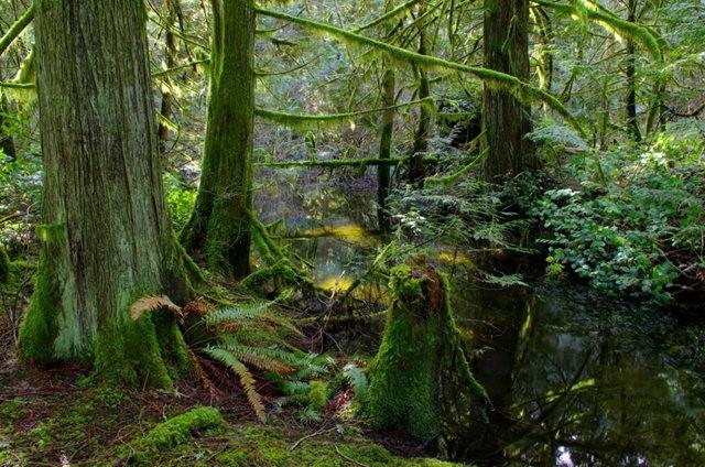 黃金溪的雨林_圖1-26