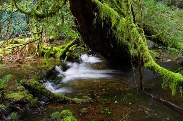 黃金溪的雨林_圖1-27