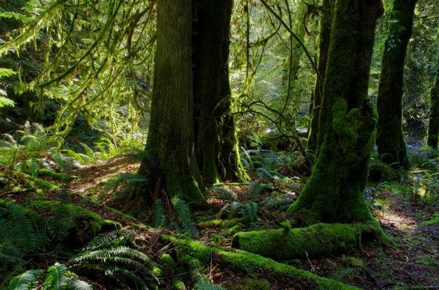 黃金溪的雨林_圖1-28