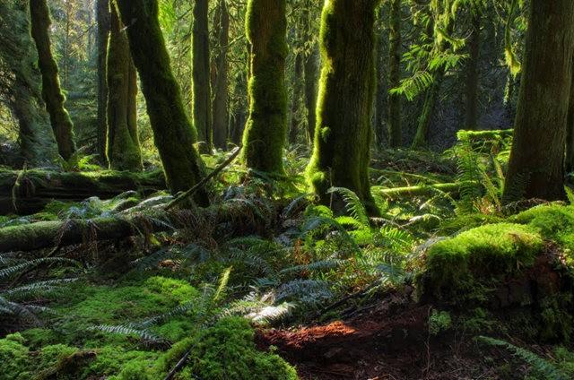 黃金溪的雨林_圖1-29