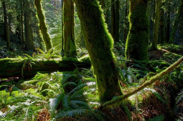 黃金溪的雨林_圖1-31