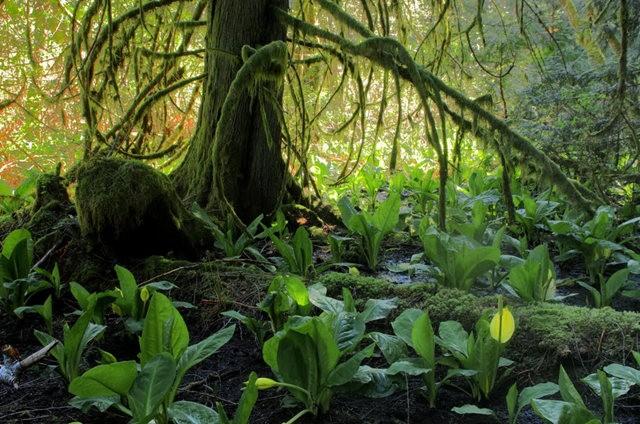 黃金溪的雨林_圖1-32