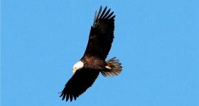 美国国鸟—白头海雕的典型捕鱼连贯动作