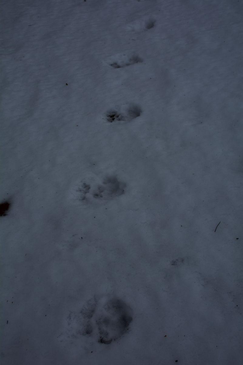塔霍湖的冬天(二)_图1-13
