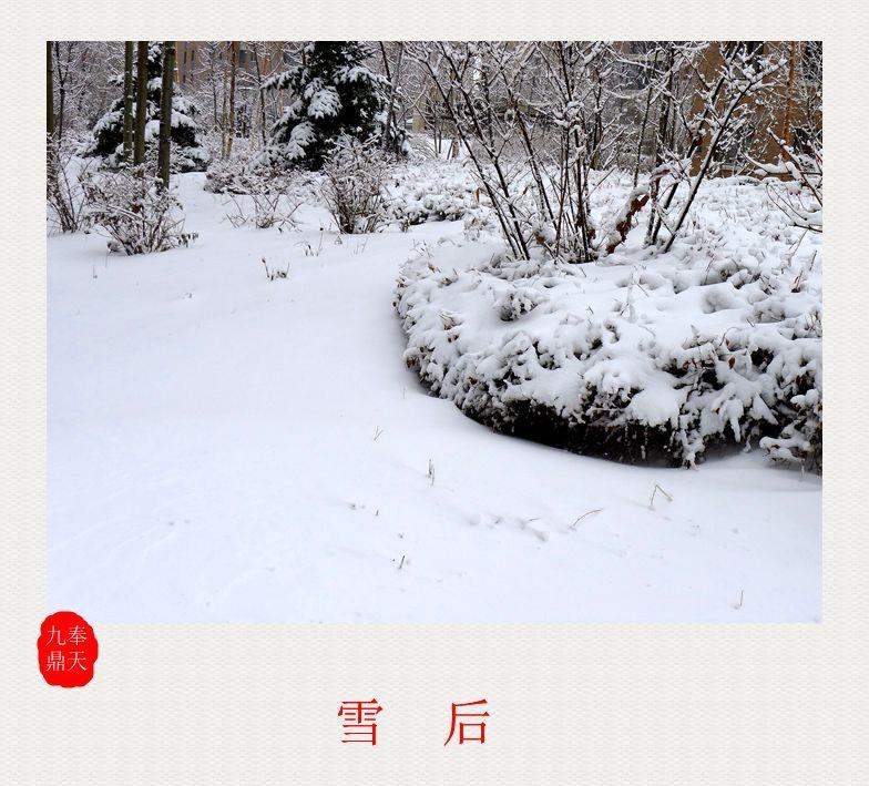 摄影    雪后_图1-1
