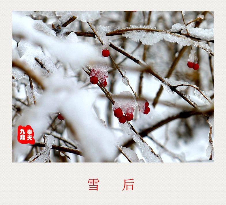 摄影    雪后_图1-2