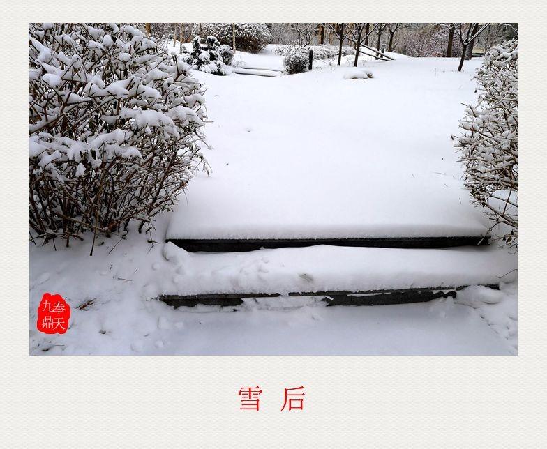 摄影    雪后_图1-3