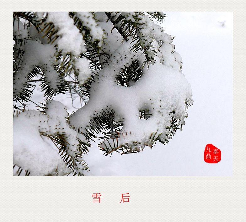 摄影    雪后_图1-5
